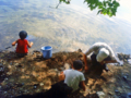 [生物][風景][リアス][三陸][牡蠣][森][海]穴蝦蛄捕り