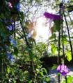[風景][リアス][三陸][牡蠣][森][海][花]朝の花