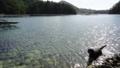 [風景][リアス][三陸][牡蠣][森][海]やっぱり海がいい