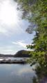 [風景][リアス][三陸][牡蠣][森][海]夏の名残(舞根湾)