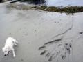 [風景][リアス][三陸][牡蠣][森][海]海が追っかけてきた!