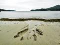 [海][砂浜]海の手(気仙沼 九九鳴き浜)