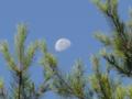 [風景][リアス][三陸][森][海][秋][月]秋の朝月