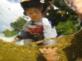 [子供][風景][リアス][三陸][海]お魚の目からみると・・・(舞根湾)