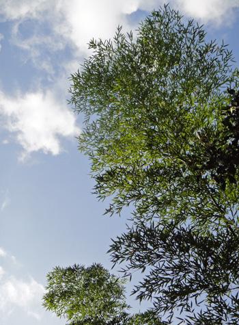 竹林の空(秋の朝、舞根)