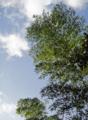 [風景][リアス][三陸][森][海][竹林][朝]竹林の空(秋の朝、舞根)