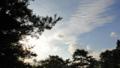 [風景][リアス][三陸][森][海][松][朝]秋雲(秋の朝、舞根)