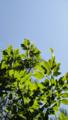 [風景][リアス][三陸][森][海][秋]柞の声