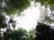 木々の合間(舞根)