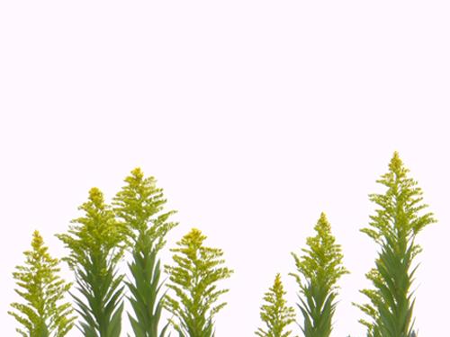 白に黄(舞根)