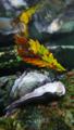 [風景][リアス][三陸][海][秋][紅葉]森と海と(舞根)