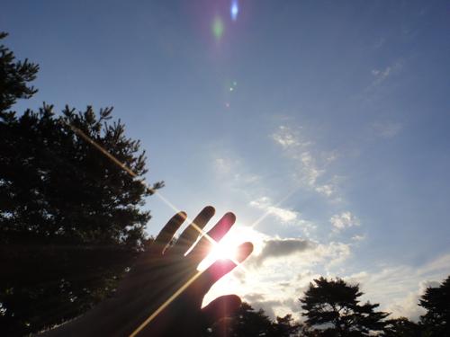 朝の光(舞根)