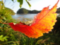 [風景][リアス][三陸][秋][落ち葉]秋のコントラスト(舞根湾)