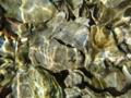 [風景][リアス][三陸][森][海][貝]海に還る