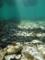 海に還る(舞根湾)