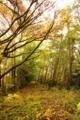 [風景][リアス][三陸][秋][空]黄色の森(舞根)