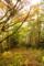 黄色の森(舞根)