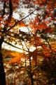 [風景][リアス][三陸][秋][空]朝日、海、紅葉(舞根湾)
