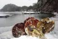 [風景][気仙沼][リアス][森][海][牡蠣]「汽水の路、雪」(舞根湾)