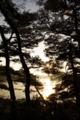 [風景][気仙沼][三陸][リアス][森][海][夜明け]朝(舞根湾)