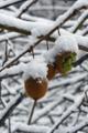 [風景][気仙沼][三陸][リアス][森][海][朝]雪ぼうし(舞根)