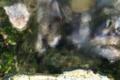 [風景][気仙沼][三陸][リアス][森][海][冬]雪解け水の染み出る岸(舞根湾)