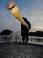 [風景][気仙沼][三陸][リアス][森][海][冬]逃したカニは大きかった(舞根湾)