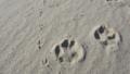 [風景][リアス][三陸][冬][砂浜]おさんぽ(九九鳴き浜、舞根)