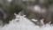 降り始めの雪(舞根)
