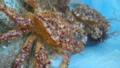 [風景][気仙沼][三陸][リアス][朝]「ケガニの介」と「ケガ二郎」(舞根湾)