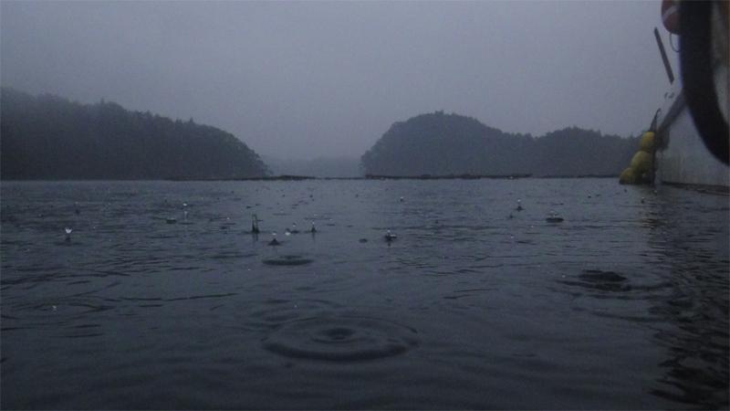 雨(舞根湾)
