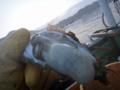 [風景][気仙沼][三陸][リアス][森][海]牡蠣(舞根湾)