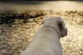 [風景][気仙沼][三陸][リアス][森][海][犬]たそがれローリー(舞根湾)