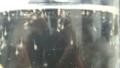 [風景][気仙沼][三陸][リアス][森][海]タラバ・エゾア幼生20110306