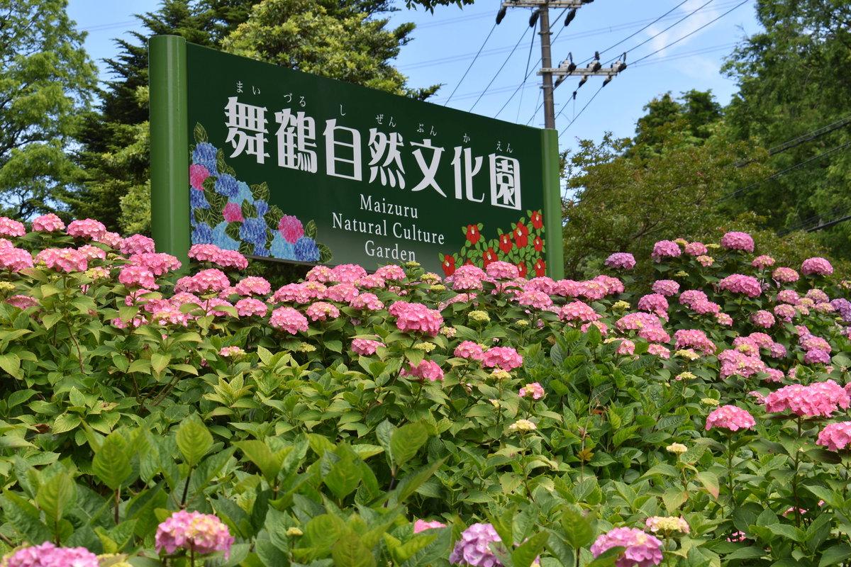舞鶴自然文化園 入園口 あじさい 2018年6月18日 撮影:MKタクシー