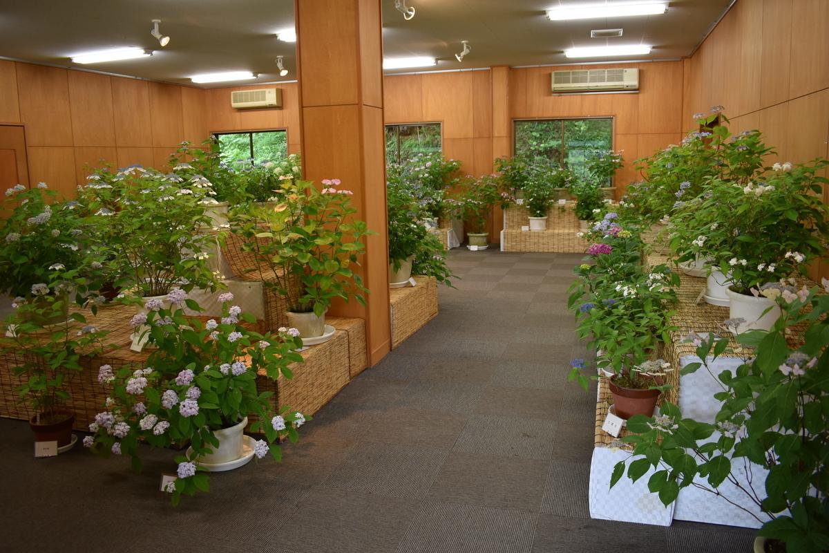 舞鶴自然文化園 鉢植えのあじさいの展示販売 2018年6月18日 撮影:MKタクシー