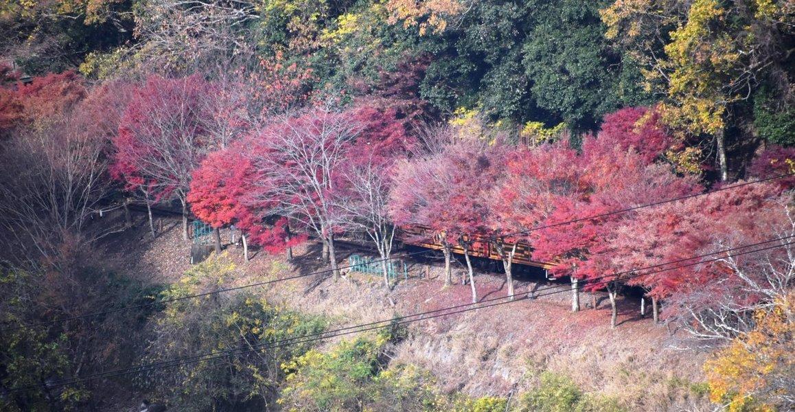 """""""亀山公園"""