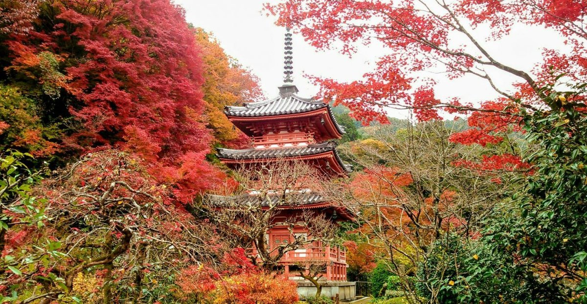 三室戸寺の紅葉