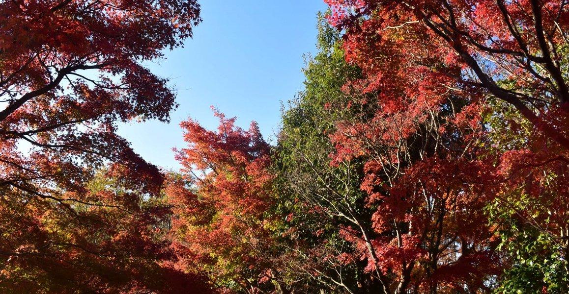 宇治市植物公園の紅葉