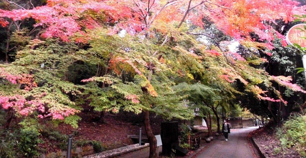 さわらびの道の紅葉