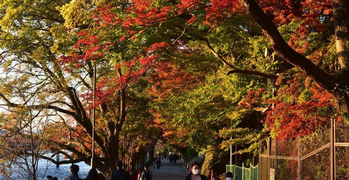 朝霧通の紅葉