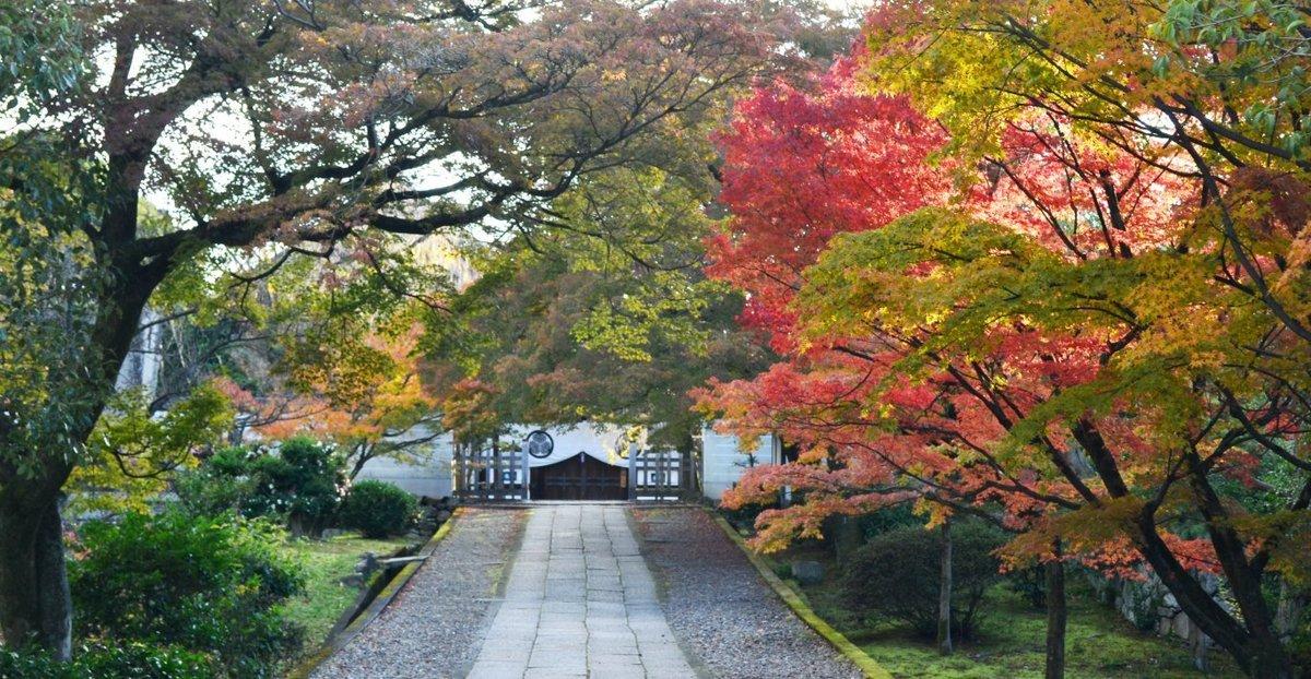 養源院の紅葉