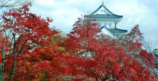 園部公園の紅葉