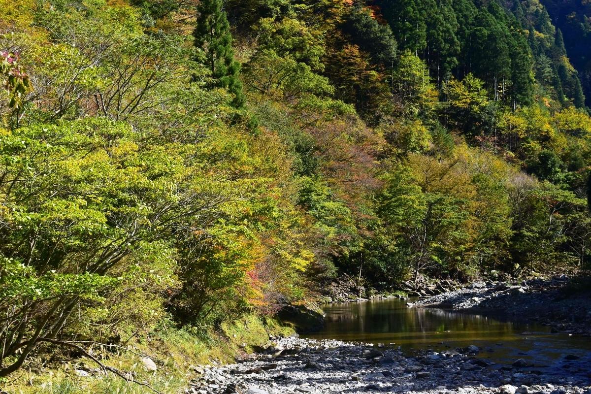 芦生研究林の紅葉