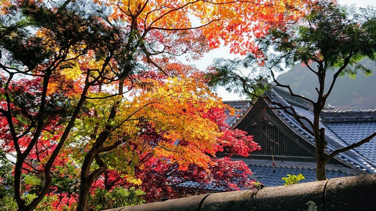 善峰寺の紅葉