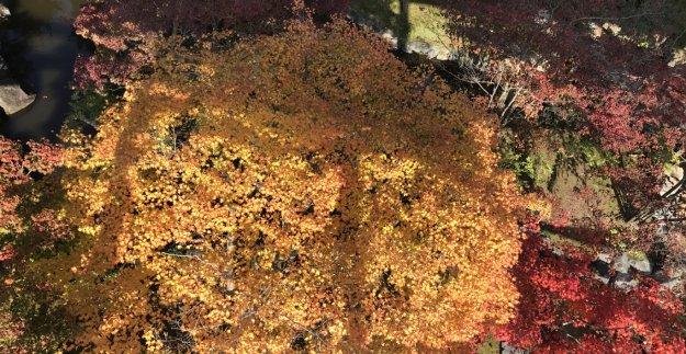 けいはんな記念公園の紅葉