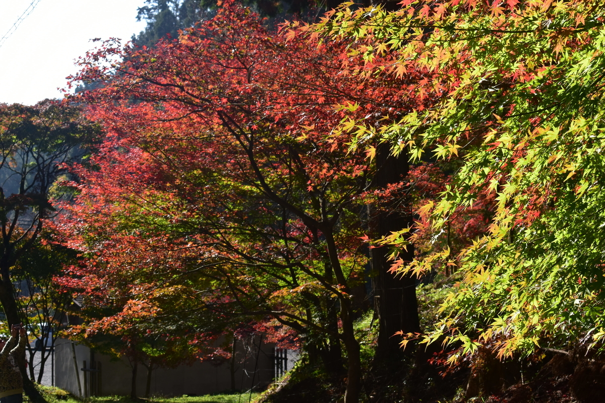 猿丸神社の紅葉