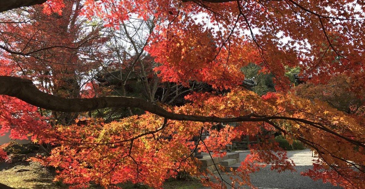 穴太寺の紅葉