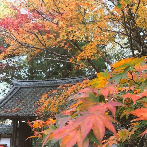 積善寺の紅葉