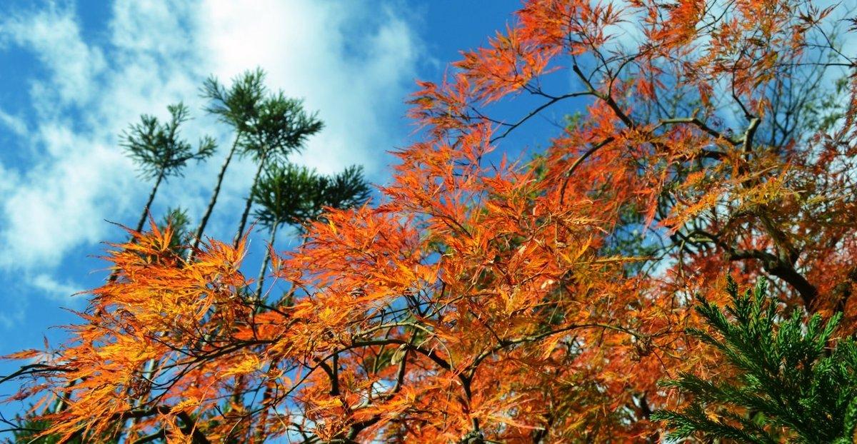 松花堂庭園の紅葉